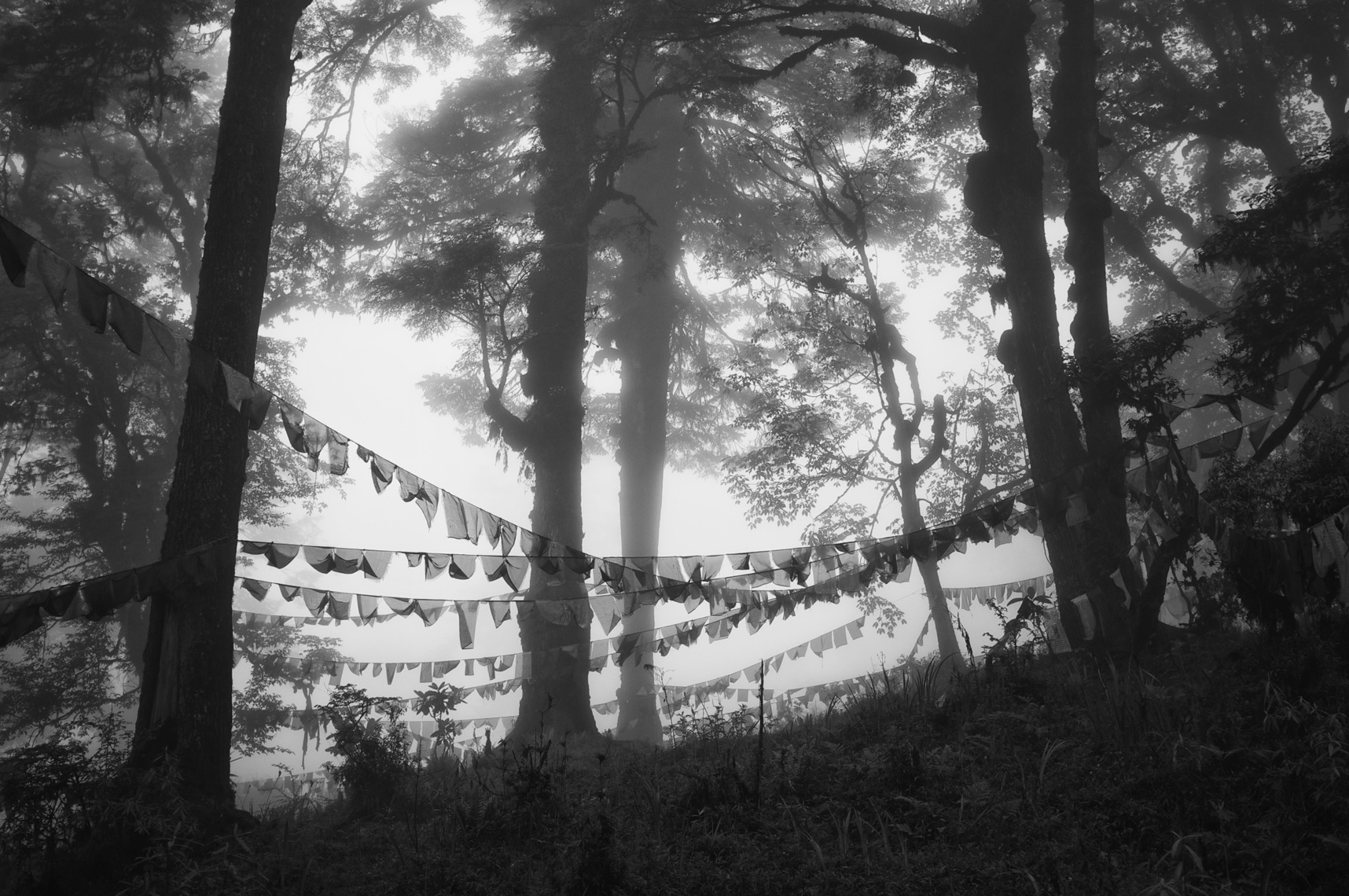rayer Flags in fog Bhutan/Steve  Mason Photography